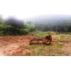 Barunei Deforestation
